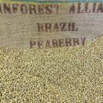 Brazil Peaberry u1280